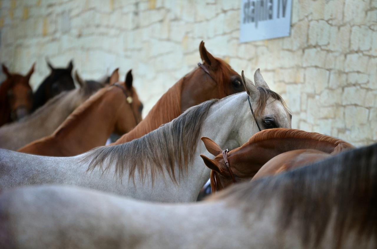 Famous Horse Breeds