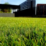 Choosing the Best Lawn Mower for Your Lawn
