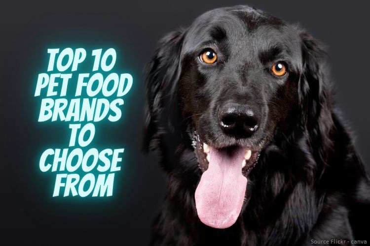 Top 10 Pet Food Brands to Choose From